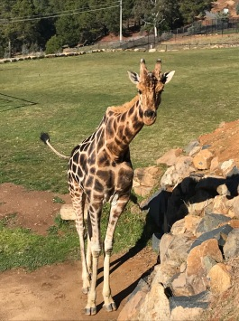 A trip to the Canberra Zoo
